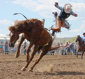 Bronco Horse