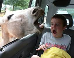 scared of horse